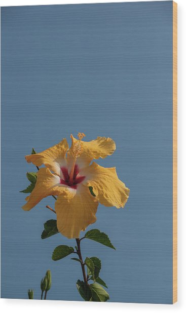 Flp-6 Wood Print