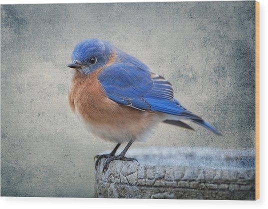 Fluffy Bluebird Wood Print