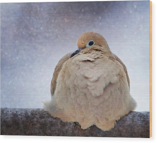 Fluffy Mourning Dove Wood Print
