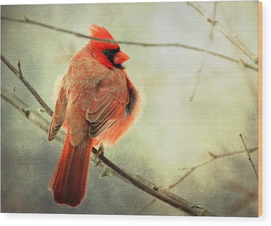 Fluffy Winter Cardinal Wood Print
