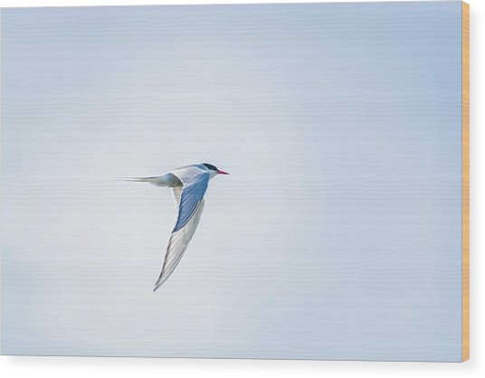 Fly-by Wood Print by Emily Bristor