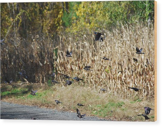 Fly For It Wood Print by Clay Peters Photography