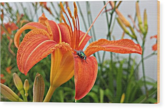 Fly Lilly Wood Print