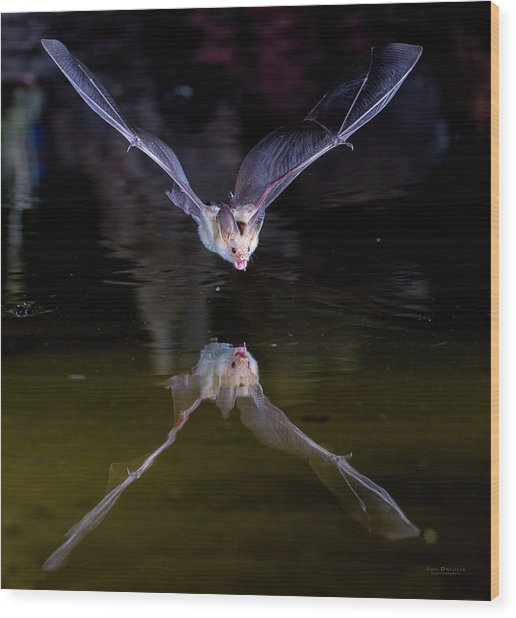 Flying Bat With Reflection Wood Print