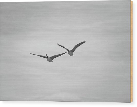Flying Companions Wood Print