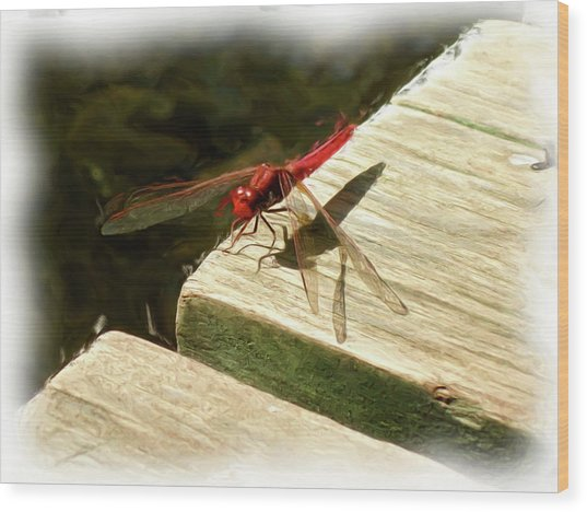 Flying Dragon At Rest Wood Print