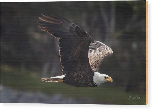 Wood Print featuring the photograph Flying Eagle by David A Lane