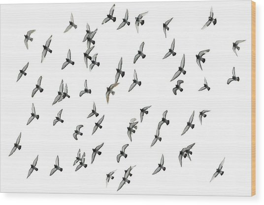 Flying Formation Wood Print by Hans Kool