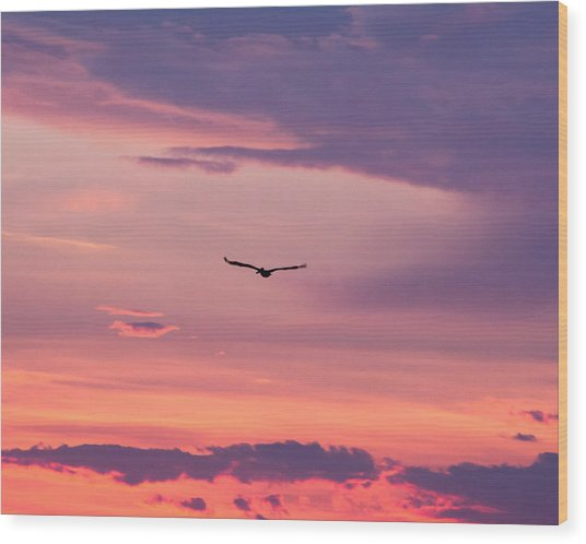 Flying Pelican At Sunset Wood Print