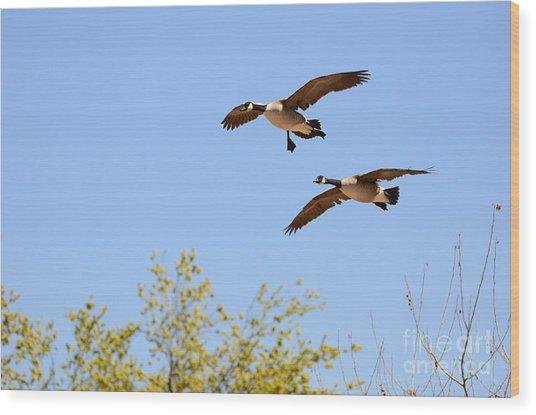 Flying Twins Wood Print