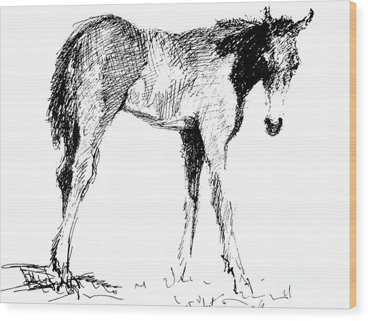 Foal In Black And White Wood Print