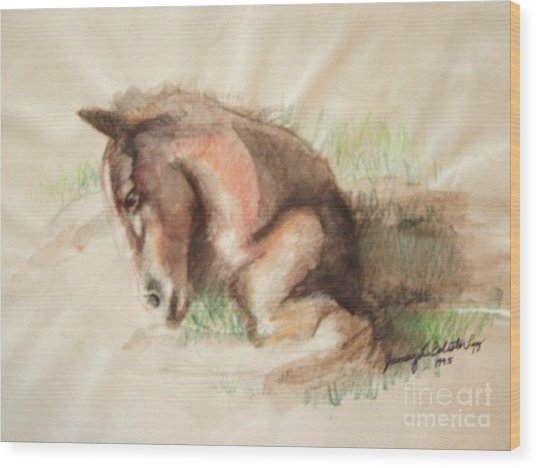 Foal Wood Print by Jamey Balester