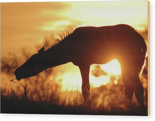 Foal Silhouette Wood Print