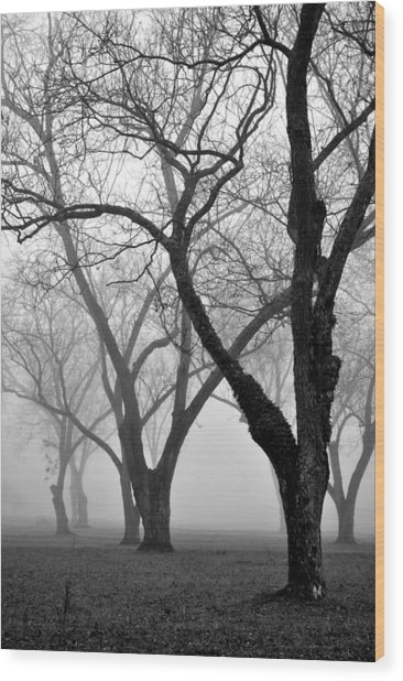 Fog 1 Wood Print by Beverly Hammond