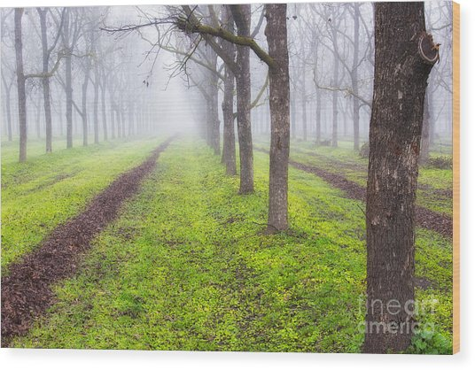 Fog And Orchard Wood Print