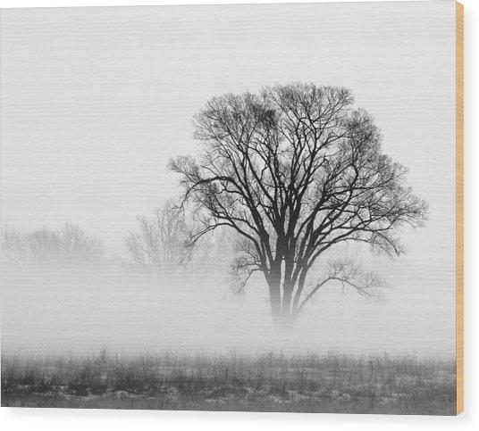 Fog Wood Print by Elizabeth Reynders