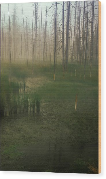 Fog In The Marsh Wood Print