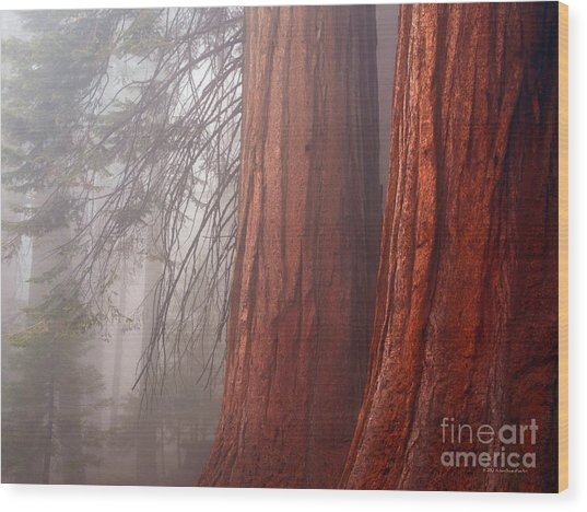 Fog In The Redwood Forest Sequoia National Park Wood Print
