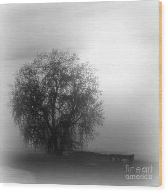 Fog Tree Wood Print