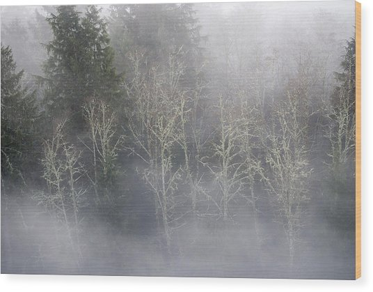 Foggy Alders In The Forest Wood Print
