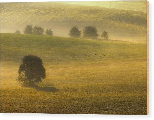 Foggy Fields Wood Print by Piotr Krol (bax)