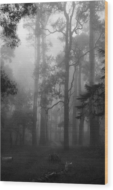 Foggy Forest Wood Print by Lois Romer