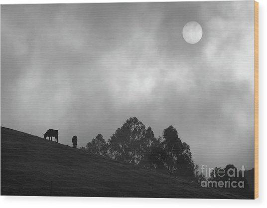 Foggy Grazing Half Moon Bay California Wood Print by Gus McCrea