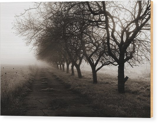 Foggy Lane Wood Print