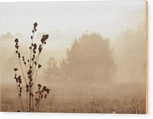 Wood Print featuring the photograph Foggy Meadow 2 by Scott Hovind