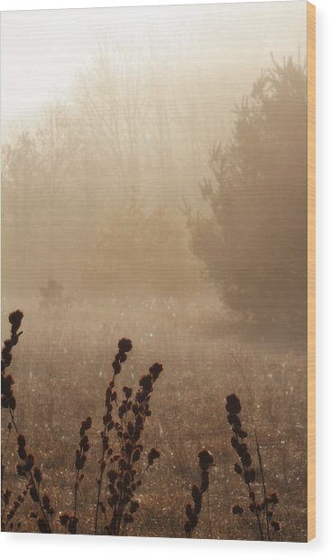 Wood Print featuring the photograph Foggy Meadow by Scott Hovind