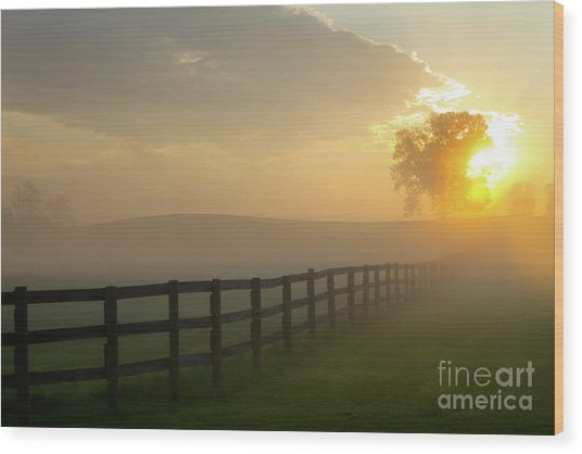 Foggy Pasture Sunrise Wood Print