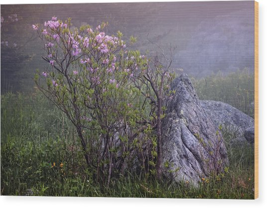 Foggy Pink Azalea Wood Print