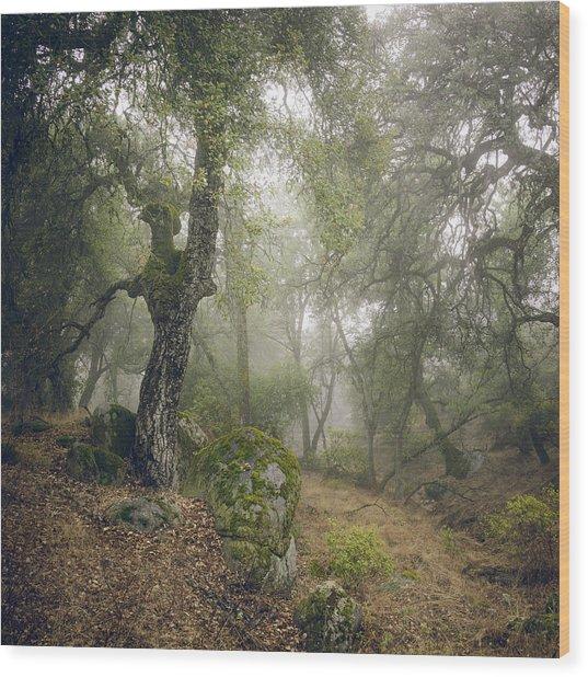 Foggy Ravine Wood Print