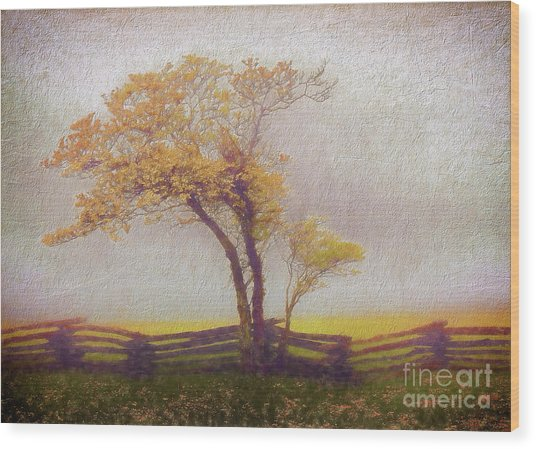 Foggy Tree And Fence In The Blue Ridge Ap Wood Print