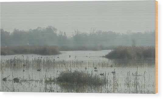 Foggy Wetlands Wood Print