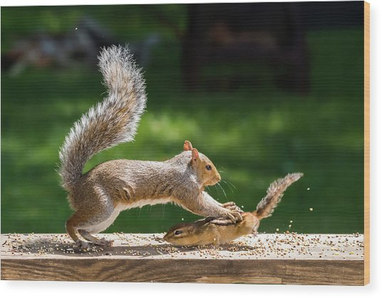 Food Fight Squirrel And Chipmunk Wood Print
