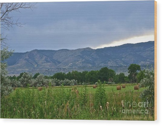 Foothills Of Fort Collins Wood Print