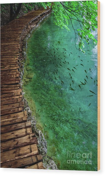 Footpaths And Fish - Plitvice Lakes National Park, Croatia Wood Print