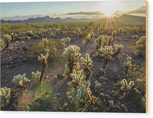 Sea Of Cholla Wood Print