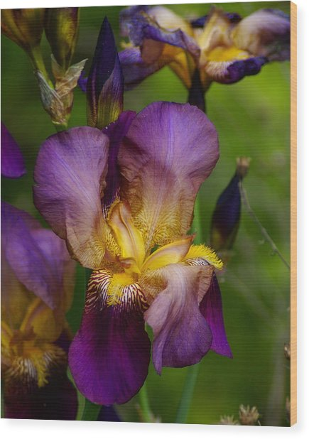For The Love Of Iris Wood Print
