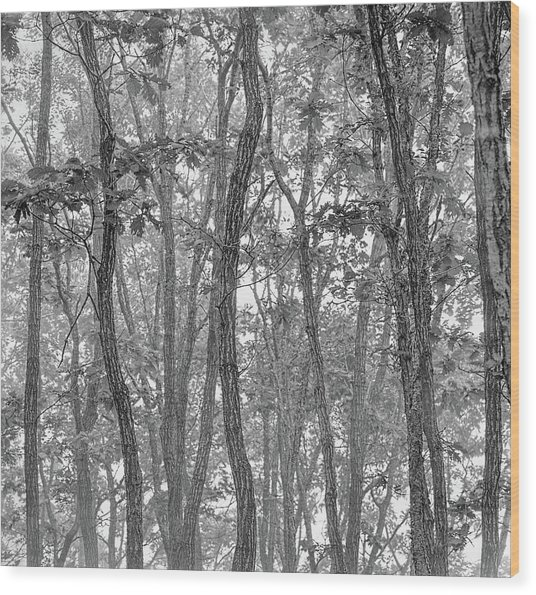 Forest #090 Wood Print