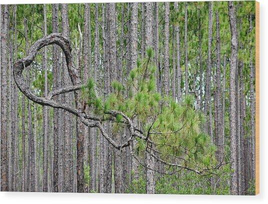 Forest Bonsai Pine Wood Print by rd Erickson
