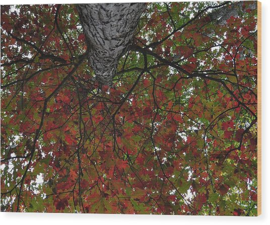 Forest Canopy Wood Print by JAMART Photography