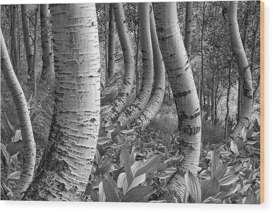 Forest Curves Wood Print