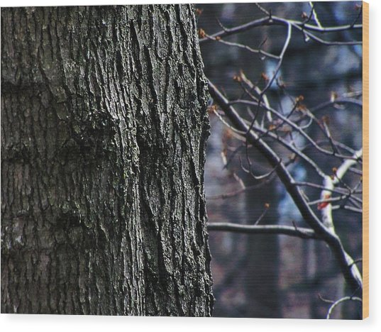 Forest Decor Wood Print by Scott Hovind