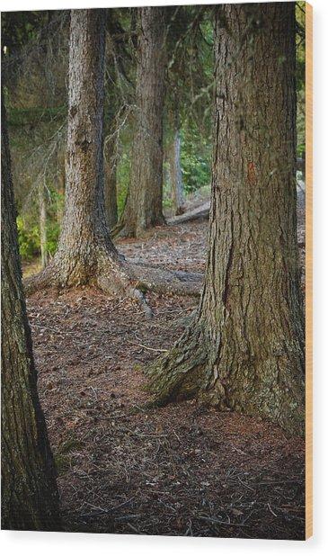 Forest Feet Wood Print by Jon Woodbury