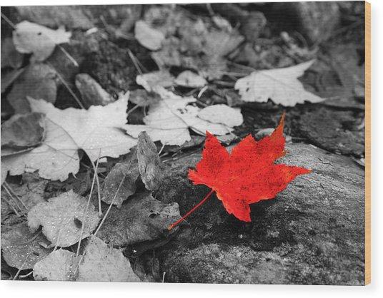 Forest Floor Maple Leaf Wood Print