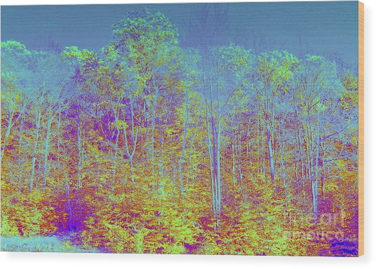 Forest Fog Wood Print