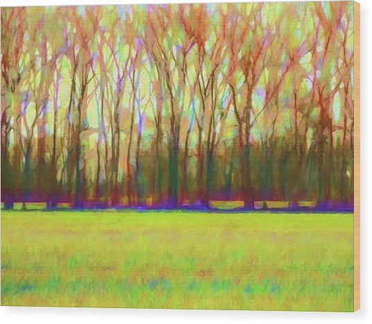 Forest In Autumn Light Wood Print