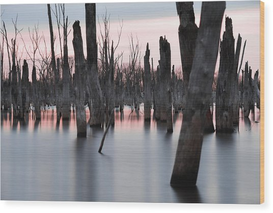 Forest In The Water Wood Print